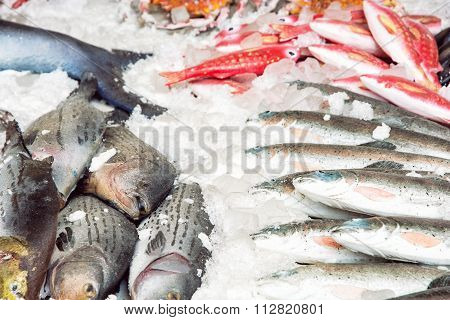 Various Fish On The Ice, Market Place