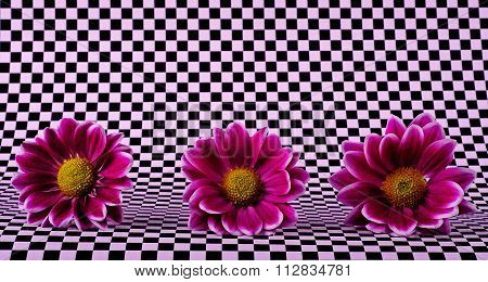 The Flowers In A Chess