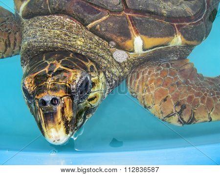 Aquatic turtle close up - half body