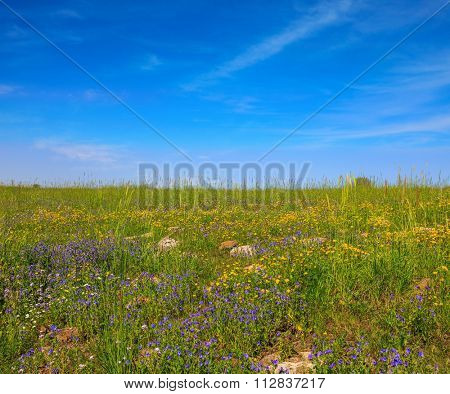 The blossoming Golan heights in a fine sunny day. Picturesque carpet of spring flowers and fresh grass. Israel