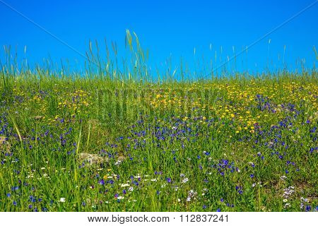 Gentle hills covered with a carpet of wild flowers. Spring flowering Golan