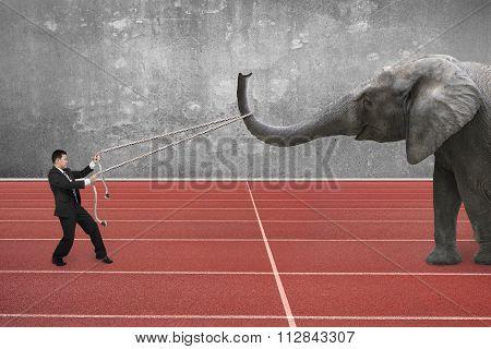 Businessman Using Rope Pulling Elephant