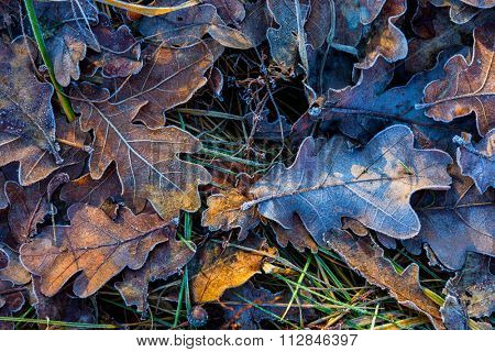 nice oak's frozen leafage closeup photo - abstract natural background