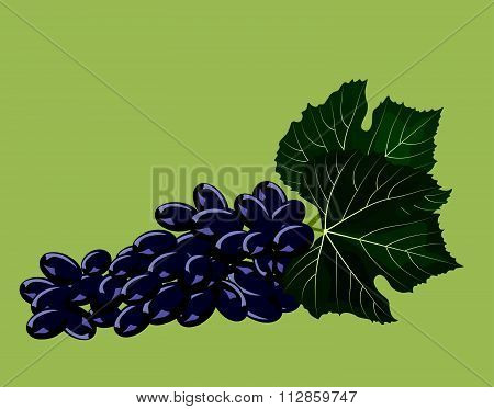 Grape cluster isolated