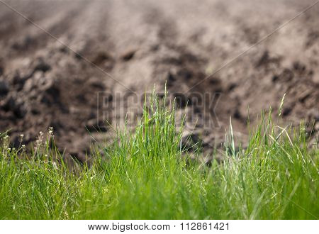 Wild Grass On The Edge Of Cultivated Land