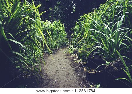 Path in rainforrest