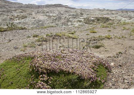 Flowering Desert Bush