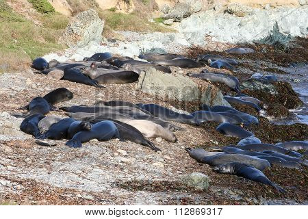 Seals At Beach Near Highway One, California, Usa