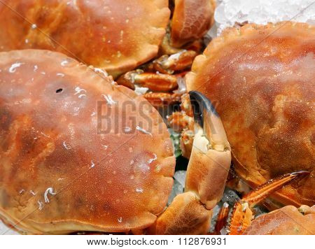 The crab pincer of sea crab on ice at fish market
