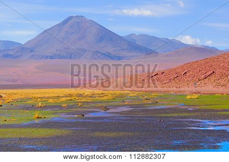 Small Swamp In Atacama Desert.