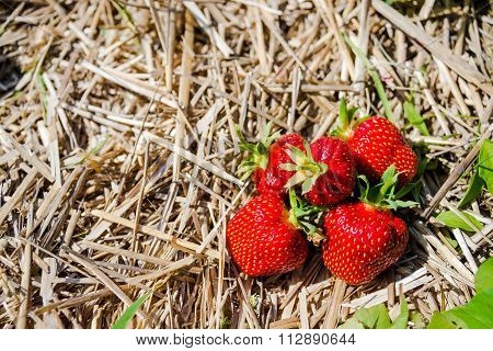 Strawberries in a heap