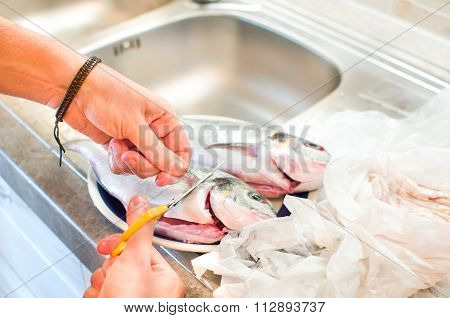 Cleaning Fish Fins Removing