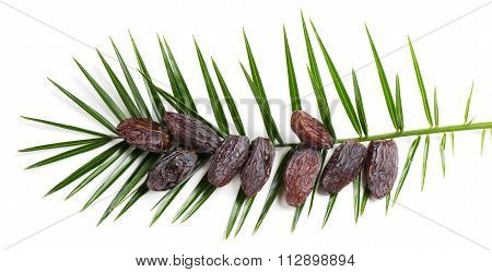 Big Leaf Of Palm And Dates, Top View