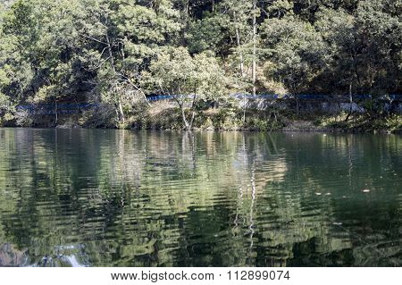 Submerged Trees In Lake