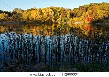 Marthaler Pond Autumn Reflections