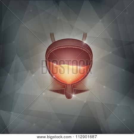Urinary Bladder Abstract Background