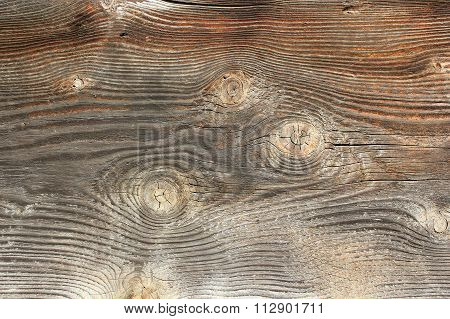 Knots On Spruce Wooden Texture