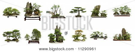 Collection Of The Best China Bonsai With White Isolated Background