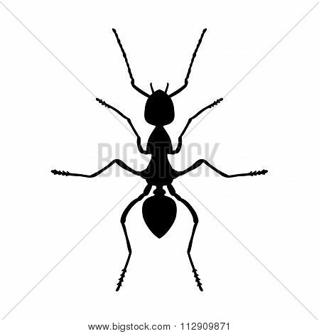 Insect Anatomy. Silhouette Formica Exsecta. Sketch Of Ant. Ant . Hand-drawn Silhouette Ant. Vector