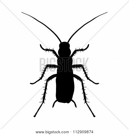 Silhouette Of Cockroach. Blattella Germanica. Cockroach. Sketch Of Cockroach Silhouette. Vector