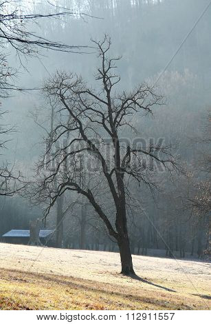 tree in the misty morning