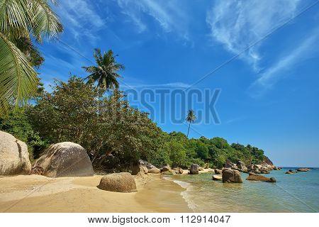 Palms on the beach Ko Samui island, Thailand