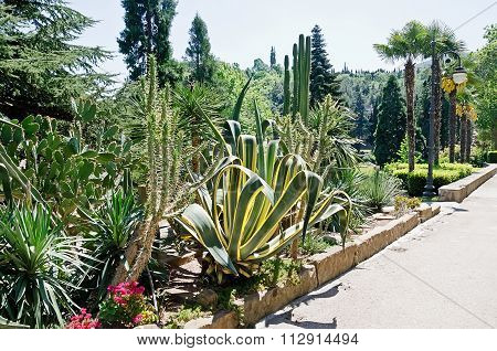 Agave And Cactus In The Park
