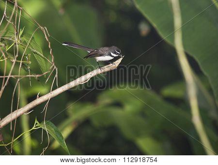 Little Black Bird
