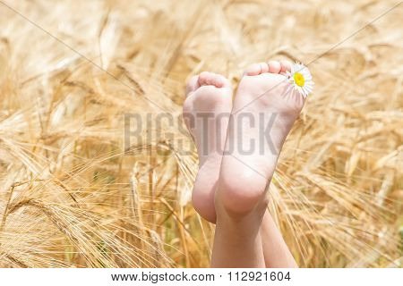 Children's Barefoot In A Field Of Barley