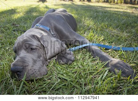 Relaxing Puppy