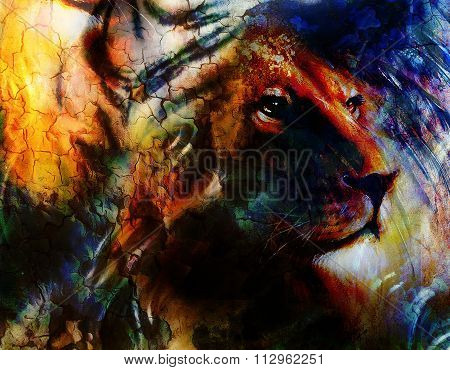 portrait lion, profile portrait, on colorful abstract  background. Abstract color collage with spots