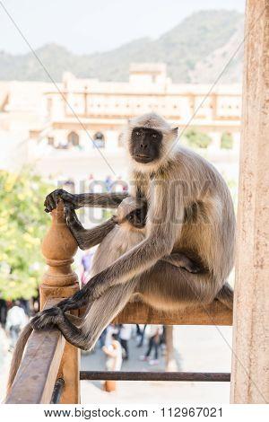 Monkey Staring at Tourists