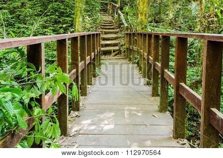 Wooden walking way in hill evergreen forest
