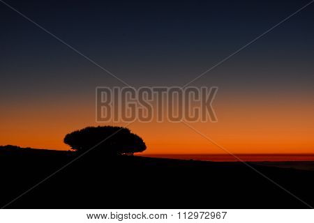 Backlight Tree Silhouette