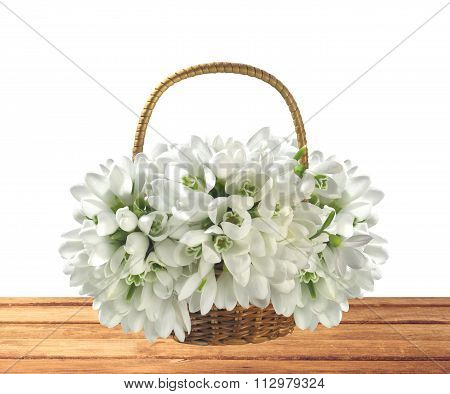 Beautiful Bouquet Of Snowdrops In Basket On Wooden Table Isolated On White