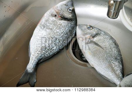 Two big fish