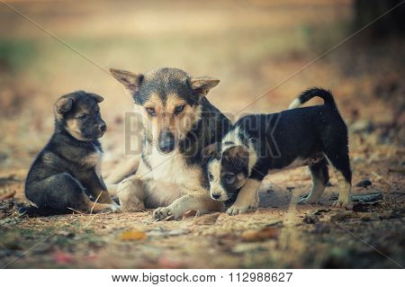Mother Dog Was Taking Care Of Puppies