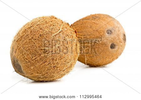 Whole Coconuts