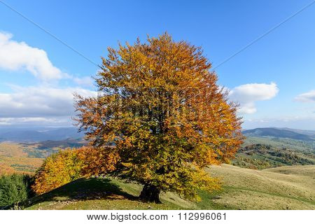 Lone Tree On The Crest Of A Hill. Horizontal View Of A Lone Tree On Top Of A Hill In A Sunny Autumn
