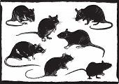 Rats Collection, Freehand Sketching, Vector Illustration poster