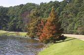 foto of natchez  - a scenic view of the natchez trace parkway during autumn - JPG