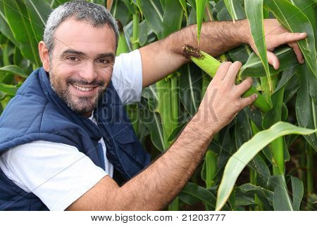 Farmer kneeling by crop