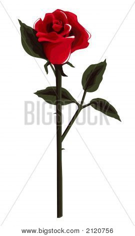 Long Stem Deep Red Rose