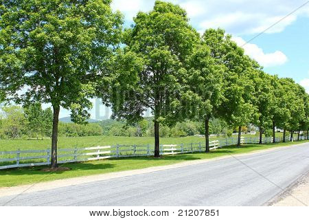 trees lining a rural pasture