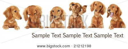Six Dachshund puppy toppers, add your own text or product.