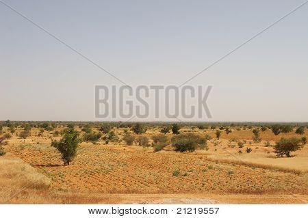 A field in African savanna