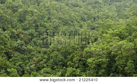 Rain Forest Canopy Seen From Above