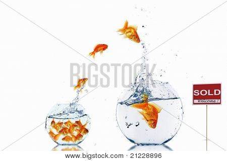 gold fish in a fishbowl with sign of sale