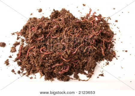 Earthworms In Ground Isolated