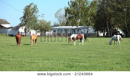 Horses in a field, southern Oregon.